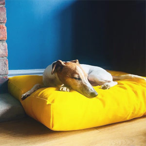 Luxury yellow cushion dog bed
